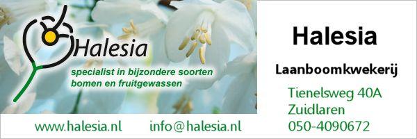 Halesia